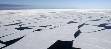 Gelo marinho em Continente antárctico Imagens de Stock