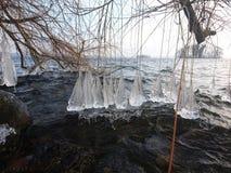 Gelo na árvore Imagem de Stock Royalty Free