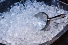 Gelo na cubeta de gelo com fresco Fotografia de Stock Royalty Free