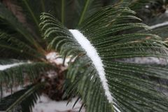 Gelo na folha no inverno fotografia de stock royalty free
