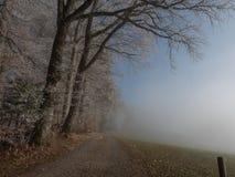 Gelo nella foresta delle alpi svizzere Fotografia Stock