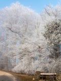 Gelo nella foresta delle alpi svizzere Immagine Stock