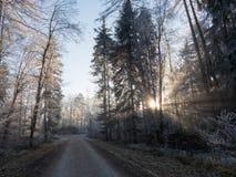 Gelo nella foresta delle alpi svizzere Fotografie Stock