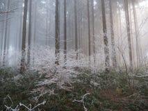 Gelo nella foresta delle alpi svizzere Immagini Stock