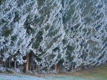 Gelo nella foresta delle alpi svizzere Fotografia Stock Libera da Diritti