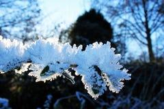 Gelo no ramo Imagem de Stock