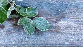 Gelo pesante sulle foglie fotografia stock libera da diritti