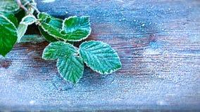 Gelo pesante sulle foglie fotografie stock