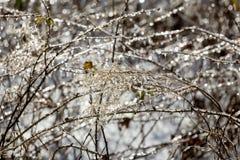 Gelo que reveste wildflowers inoperantes em quedas parque do vale, Connecticut fotografia de stock