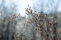 Gelo que reveste wildflowers inoperantes em quedas parque do vale, Connecticut imagem de stock royalty free