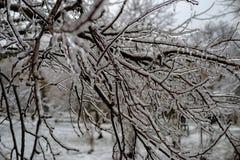 Gelo silencioso Fundo congelado das plantas foto de stock