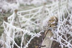 Gelo su filo spinato Fotografia Stock