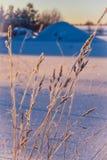Gelo sui luccichii dell'erba nel tramonto fotografia stock libera da diritti