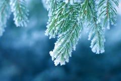 Gelo sul pino Immagine Stock