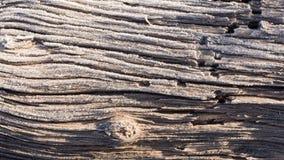 Gelo sul vecchio tronco di albero con i lotti di struttura Fotografie Stock Libere da Diritti