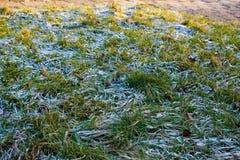 Gelo sull'erba Immagini Stock