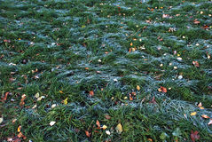 Gelo sull'erba verde con il gelo di mattina Fotografia Stock Libera da Diritti
