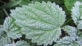 Gelo sulla foglia verde Fotografia Stock Libera da Diritti