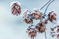 Gelo sulle piante nell'inverno Fotografia Stock