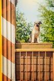 Gelockter brauner Hundespringendes Sitzen an der Baustelle Stockfotografie