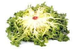 Gelockter Salat auf einem weißen Hintergrund lizenzfreie stockbilder