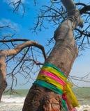 Gelovige boom stock afbeelding