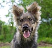 Gelovige hond Royalty-vrije Stock Afbeeldingen