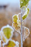 Gels d'automne. Photo stock