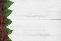 Gelsi e foglie Immagini Stock Libere da Diritti