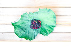 Gelso sulle foglie del loto dalla Tailandia Fotografia Stock
