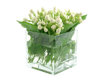 Gelsomini in vaso Fotografie Stock