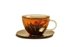 Gelsomino del tè Immagini Stock Libere da Diritti