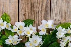 Gelsomino, fiori del gelsomino Immagini Stock Libere da Diritti