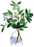 Gelsomino in un vaso Fotografie Stock
