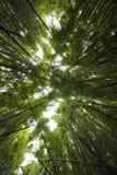 Geluiden in een Bamboebos royalty-vrije stock fotografie