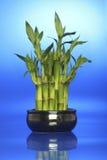 Gelukkig bamboe Royalty-vrije Stock Afbeeldingen