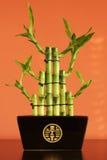 Gelukkig bamboe op de plank Royalty-vrije Stock Afbeeldingen