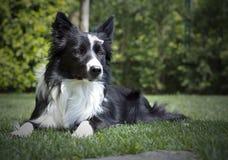 Gelukkig border collie-puppy in de tuin, met papillon in het hoofd Royalty-vrije Stock Fotografie