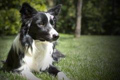 Gelukkig border collie-puppy in de tuin, met papillon in het hoofd Royalty-vrije Stock Afbeelding