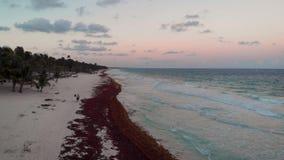 Gelukkig in de holdingshanden die van het liefdepaar onderaan een tropisch strand in Tulum, Mexico lopen stock footage