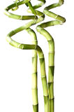 3 gelukkig die bamboe op wit wordt geïsoleerd Stock Afbeeldingen