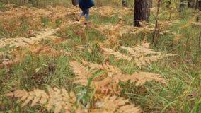 Gelukkig die meisje in de herfstbos in werking wordt gesteld stock videobeelden