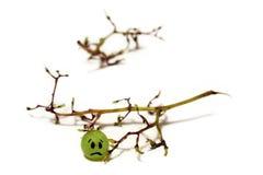 Gelukkig/droevig druivenfruit stock foto's
