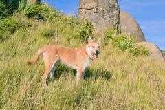 Gelukkig en heartily hond die bij bergen wandelen stock fotografie