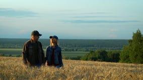 Gelukkig en paar, man en vrouw die op middelbare leeftijd terwijl het lopen op tarwegebied bij de avond van de zonsondergangzomer stock videobeelden