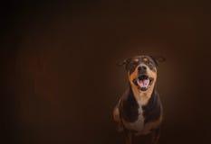 Gelukkig het glimlachen van zwarte hond op klassieke en uitstekende kleurenachtergrond Royalty-vrije Stock Foto's