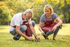 Gelukkig hoger paar die in de binnenplaatstuin samen tuinieren in ochtendtijd oude mensen die op gras zitten die een boom buiten  stock foto's