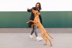 Gelukkig hond en eigenaarspel tegen de achtergrond van de muur hondsprongen hoog achter de hand van het meisje stock afbeelding