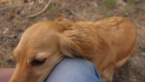 Gelukkig huisdier de hond speelt met de eigenaar de grappige hond glimlacht en toont tong groepswerkdier en mens de hond porde va stock videobeelden