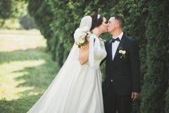 Gelukkig huwelijkspaar die in een botanisch park lopen stock foto's